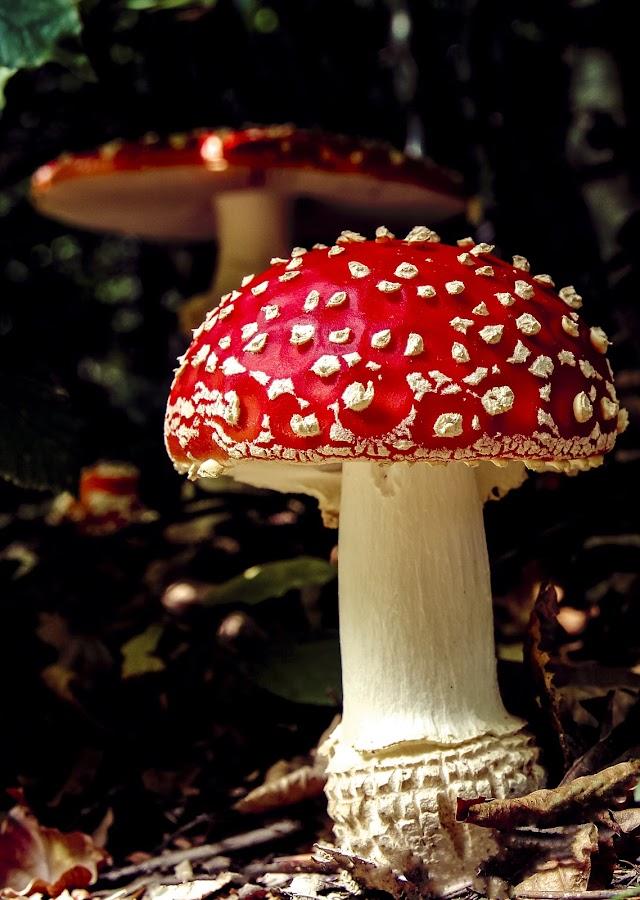 by Adrian Rusu - Nature Up Close Mushrooms & Fungi ( Hope, , mushroom, nature, natural )