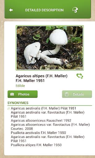 免費下載書籍APP|Mushrooms Sync app開箱文|APP開箱王