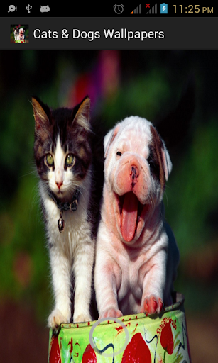 Cats Dogs Wallpapers