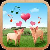 돼지가족계획