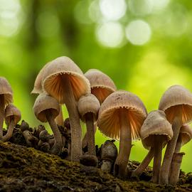 Fungi group on a stump by Peter Samuelsson - Nature Up Close Mushrooms & Fungi