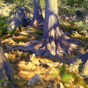 by Jan Davis - Nature Up Close Trees & Bushes