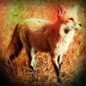 Fox Effetti sonori