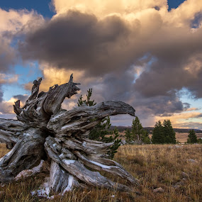 The Fallen One by Veronika Kovacova - Landscapes Prairies, Meadows & Fields ( clouds, sky, tree, sunset, montana, fall, beartooth mountains, cooke city, golden hour )
