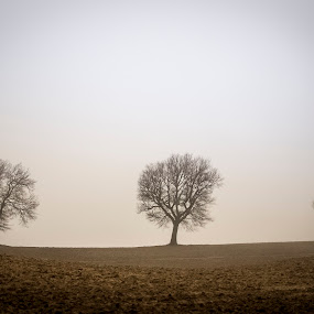 Three trees by Frans Scherpenisse - Nature Up Close Trees & Bushes ( hills, foggy, fog, trees, italy )