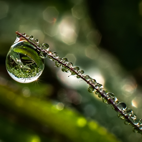 by Kawan Santoso - Nature Up Close Natural Waterdrops (  )