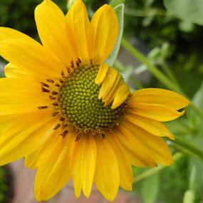 wake up by Vikas Jorwal - Flowers Single Flower ( , Hope )