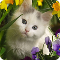Cute Cat Live Wallpaper icon