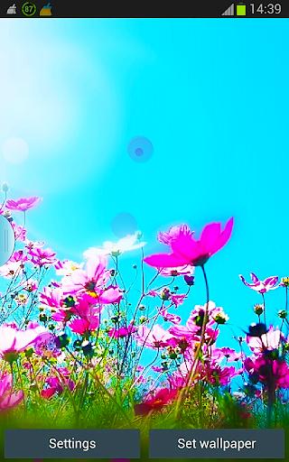 Summer n Flowers HD Wallpaper