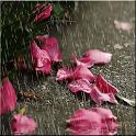 Yağmur Canlı Duvar Kağıdı icon