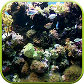 Natural Aquarium Wallpaper