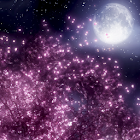 Cherry blossom LiveWallpaper icon