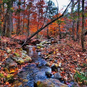 by Stacy Knighton - Landscapes Forests
