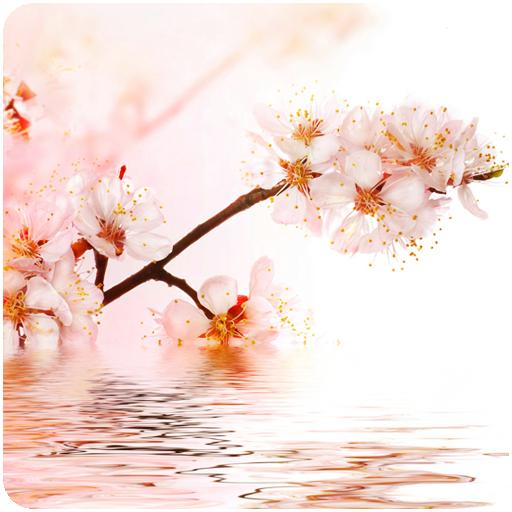 3D Sakura