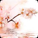 3D Sakura logo