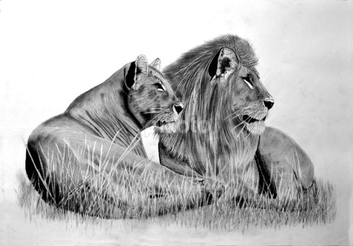 Kjhayler wild animal portraits from original pencil drawings