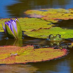 by Margie MacPherson - Animals Amphibians