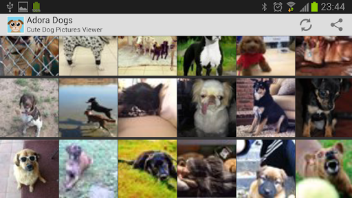 Cute Dog Pictures - Adora Dogs 1.0 screenshots 2