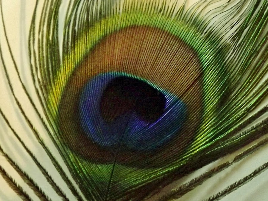 feathers  by Sue Anderson - Artistic Objects Other Objects