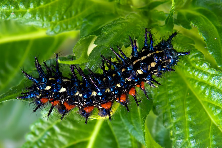 Caterpillars Sunflowers by Biak Kuale - Animals Insects & Spiders