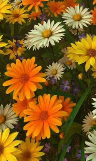 Wildflowers live wallpaper