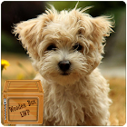 cute puppy lwp icon