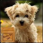 perrito lindo lwp icon