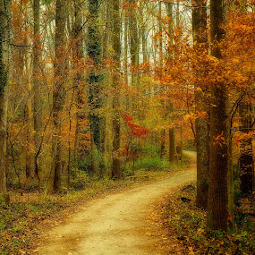 Wooded Path by Jim Ackermann - Landscapes Forests ( tree, fall, trail, lake accotink park, woods )