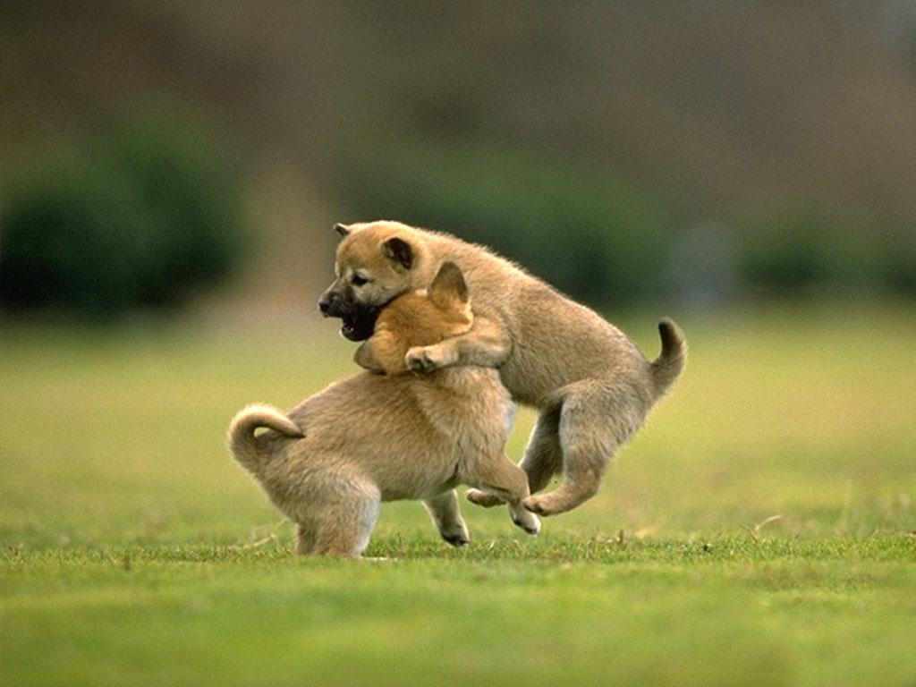 animals wallpapers - android apps on google play