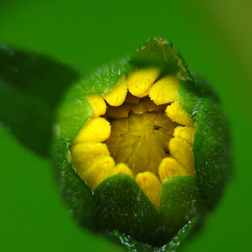 New Life by Saurabh Gaikwad - Flowers Flower Buds (  )