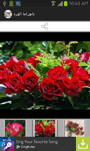 بانوراما الورد ♥اجمل ورود الحب
