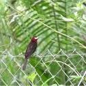 Red neck bird