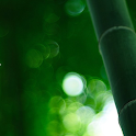 Bamboo Forest LiveWallpaper icon