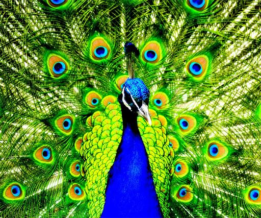 玩免費個人化APP|下載美しい孔雀の壁紙 app不用錢|硬是要APP
