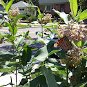 Monarch butterfly and bumble bee