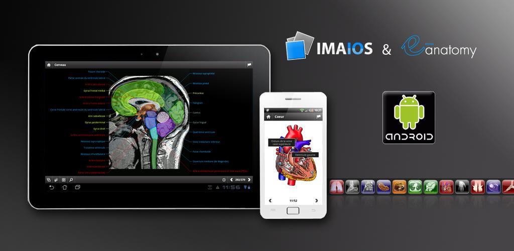 e-Anatomy 4.7.1 Apk Download - net.imaios.eanatomy APK free