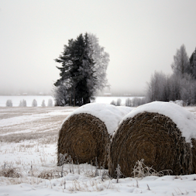 Winter food by Elisabeth Johansson - Nature Up Close Trees & Bushes ( winter, tree, hay, snow )