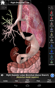 Essential Anatomy 3 v1.1.3
