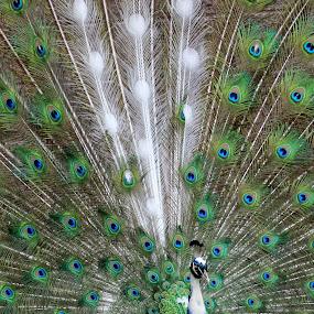 by Karen Jaffer - Animals Birds