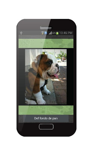 Wallpapers Live Bulldogs Puppy