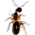 insect smarsher icon