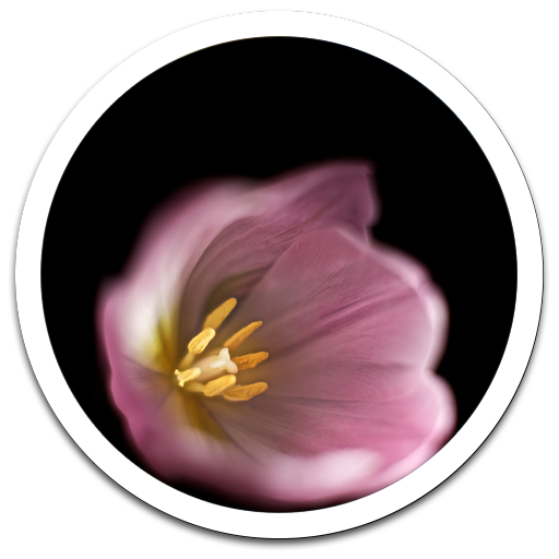 My Photo Wall flower petal LWP 個人化 App LOGO-APP試玩