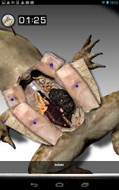 Froguts Frog Dissection Screenshot 15