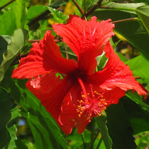 Edible and Medicinal Plants of Costa Rica