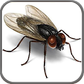 3D Pesky Bugs Live Wallpaper