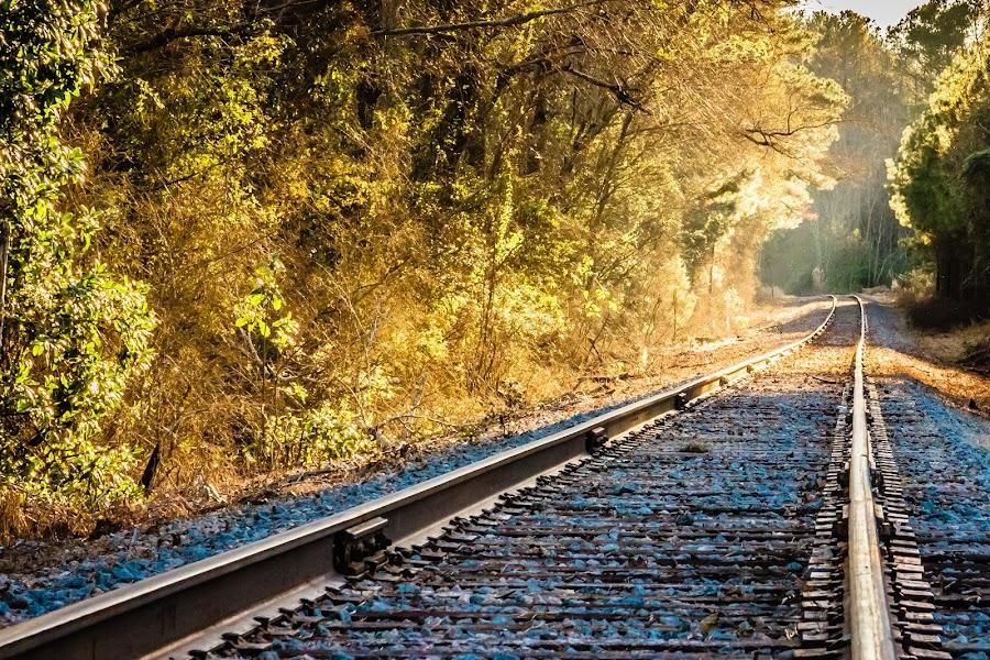 Beam of Light by Carol Plummer - Transportation Railway Tracks ( train tracks, nature, trees, transportation, tracks, light, sun beam, rays, railway tracks )