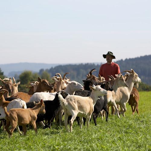 Ziegenfarm im Schwarzwald