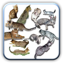 Amazing Cats pictures icon