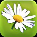 Blumy - Linguaggio dei fiori icon