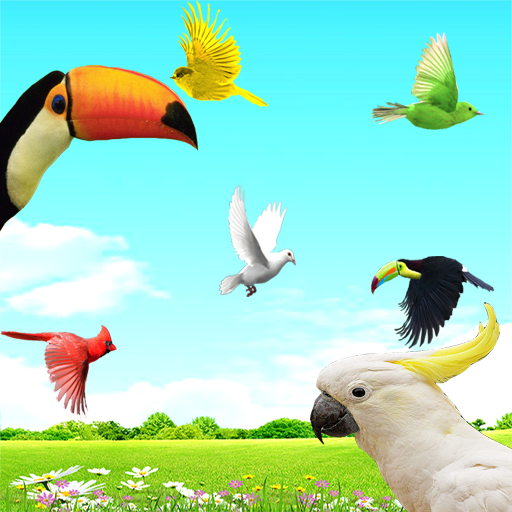 Sky Birds Live Wallpaper